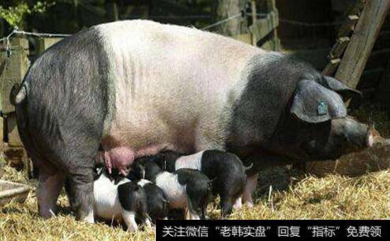 猪肉概念股龙头股|猪肉概念股受关注 猪价短期迎季节性小反弹